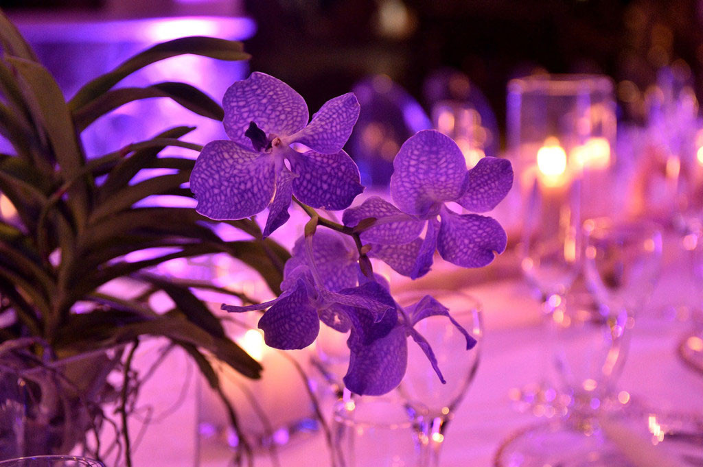 flores indura